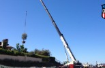 Mobile Cranes Available for Lifting and Setting Large Trees