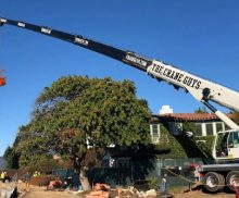 Tree Trimming Bucket Truck Rentals