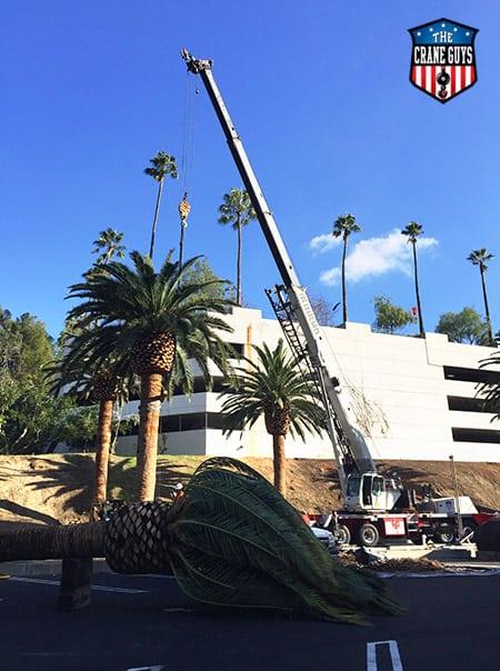 Tree Trimming Truck Rentals